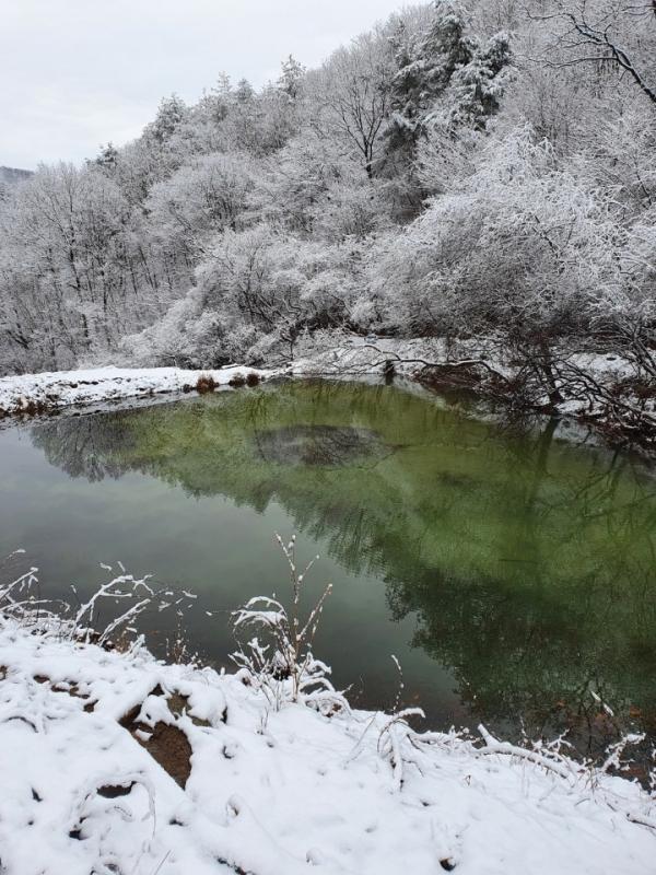 청도자연캠프장의 연못(사진촬영 이광식 부부)